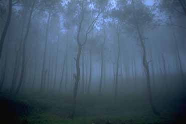 ゴドン・ソンゴ(霧の森)